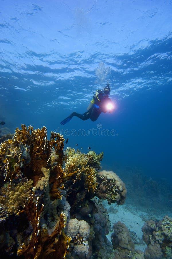Subacqueo: Scuba-Operatore subacqueo & barriera corallina immagini stock libere da diritti