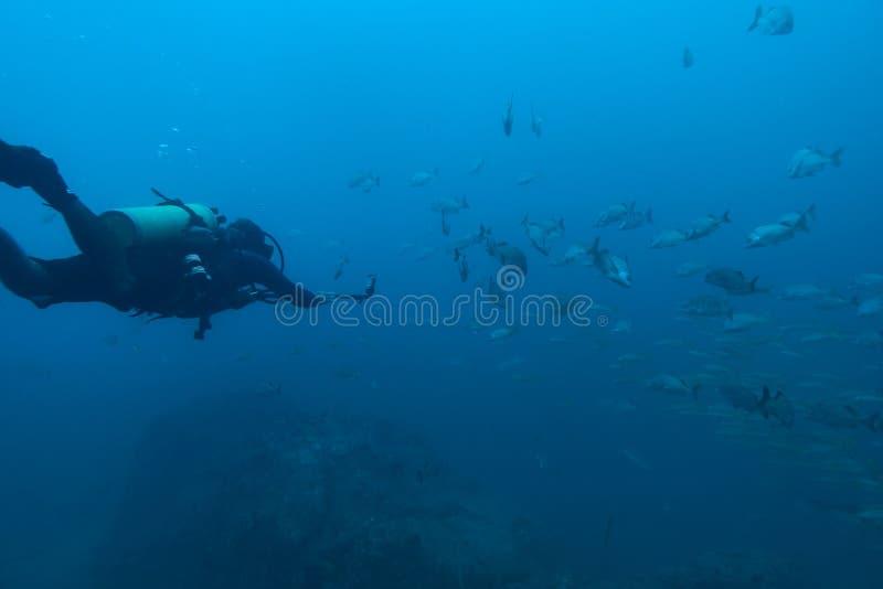 Subaqueo che registra video subacqueo fotografia stock libera da diritti