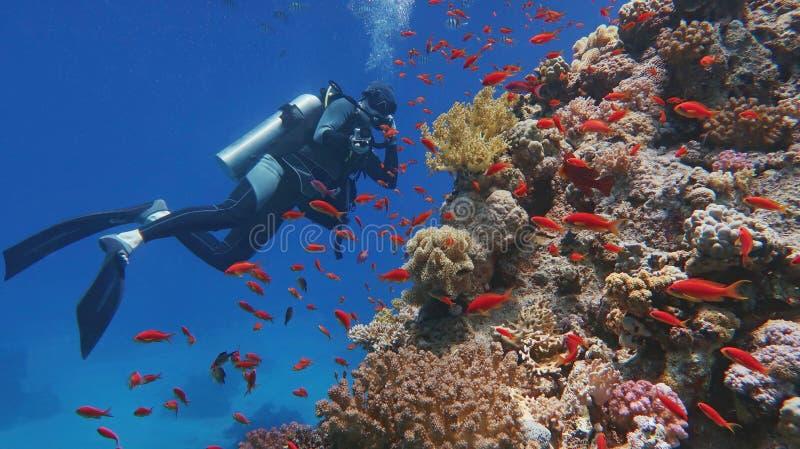Subaqueo dell'uomo che ammira bella barriera corallina tropicale variopinta fotografia stock