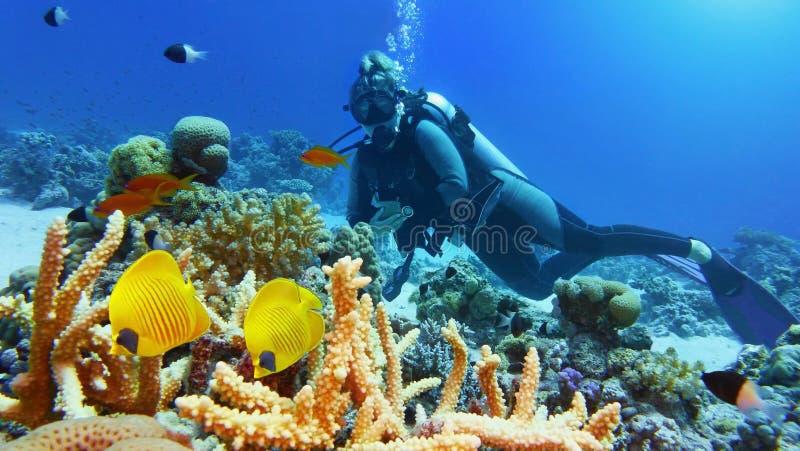Subaqueo della donna e coppie di bello pesce di corallo giallo immagini stock libere da diritti
