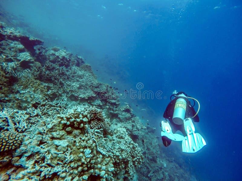 Subaqueo subacqueo vicino alla barriera corallina, Maldive immagini stock libere da diritti
