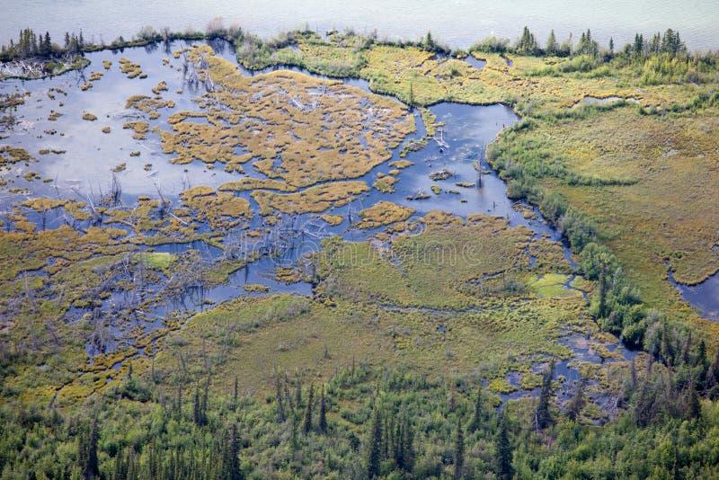 Subarktische nördliche Waldsumpfgebietuferantenne lizenzfreie stockbilder