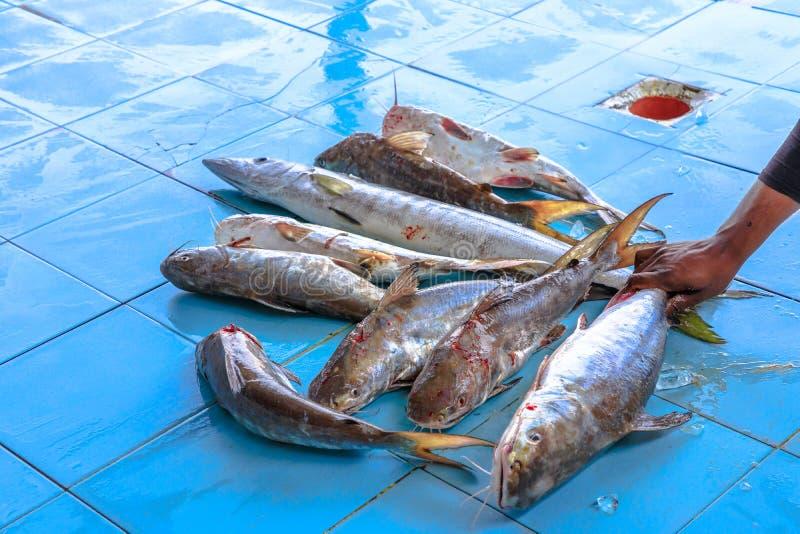 Subasta de pescado del grupo imagen de archivo