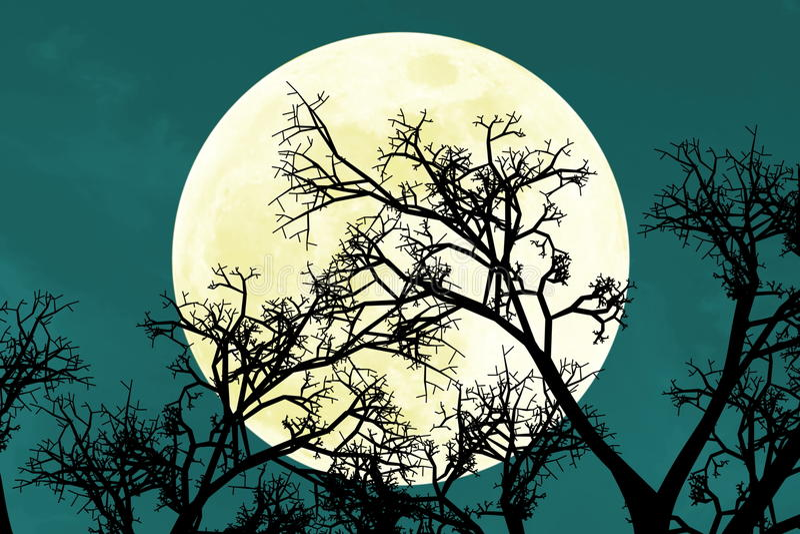 Subida brillante hermosa de la Luna Llena detrás de ramas de árbol ilustración del vector