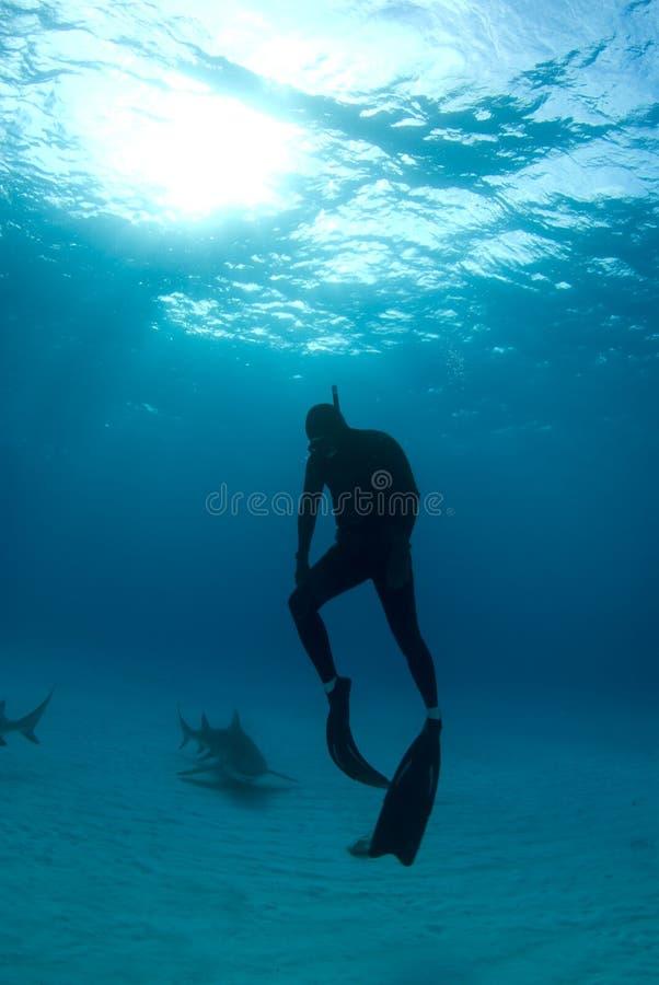 Subida de Freediver con los tiburones fotografía de archivo libre de regalías