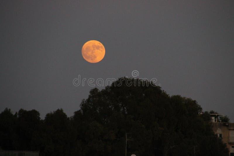 Subida de la Luna Llena sobre el Treeline imagen de archivo libre de regalías