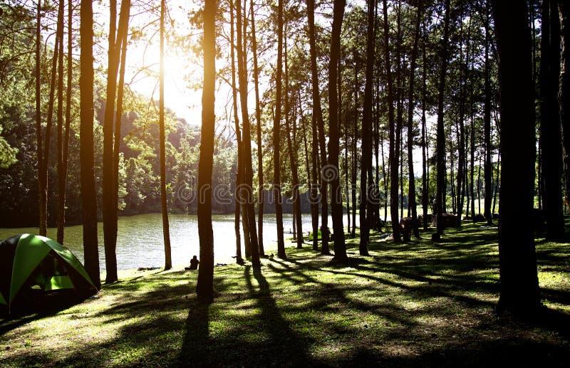Subida de Sun en la punzada-ung, bosque del pino fotos de archivo