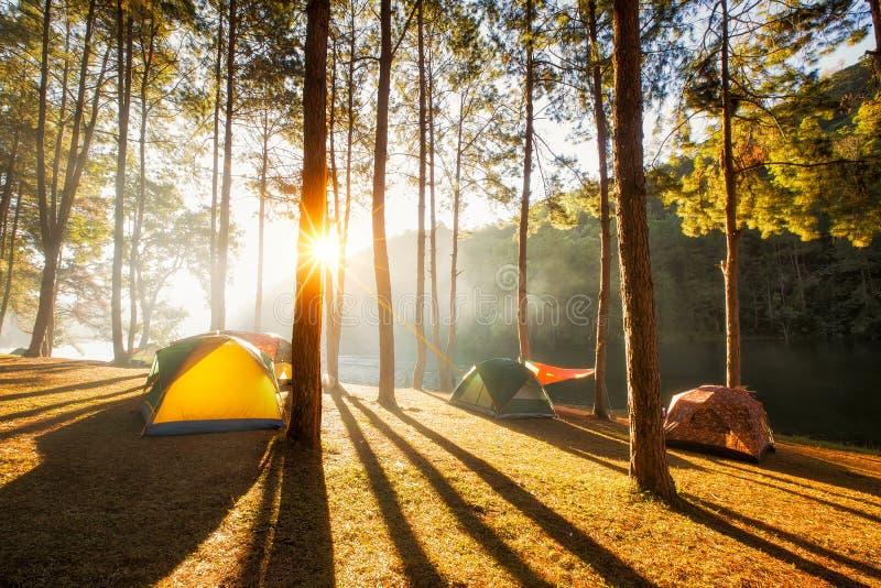 Subida de Sun en la punzada-ung, bosque del pino en Tailandia imagenes de archivo