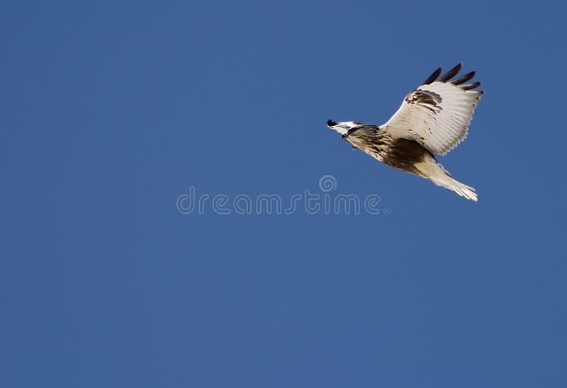 Download Subir foto de stock. Imagem de legged, wildlife, mosca - 525394