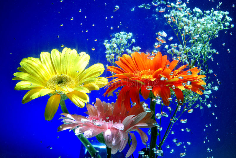 Submarinas Flores стоковые фотографии rf
