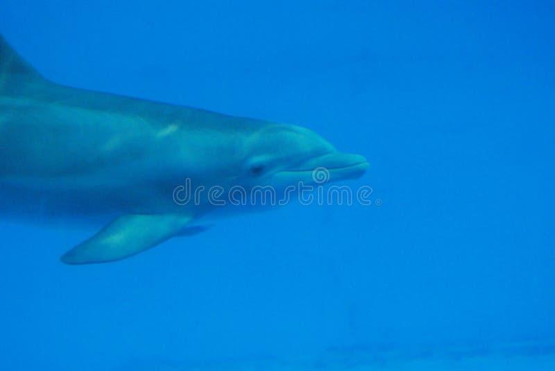 Submarino hecho frente dulce del delfín imagen de archivo libre de regalías