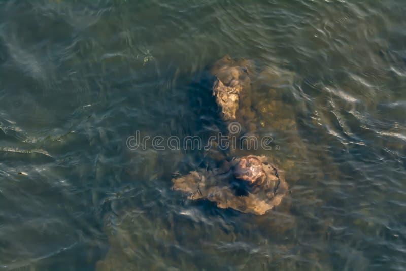 Submergé sous l'eau - statues de Lord Shiva et de Nandi photographie stock