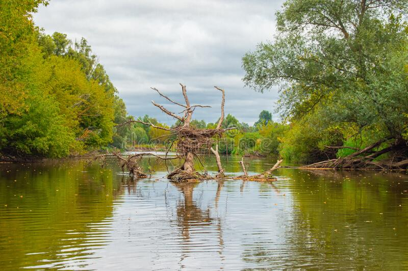 Submerged, dead dry tree in middle of riverbed created bizarre, grotesque, fantastic, strangely shaped formation with bird nest i royalty free stock photo