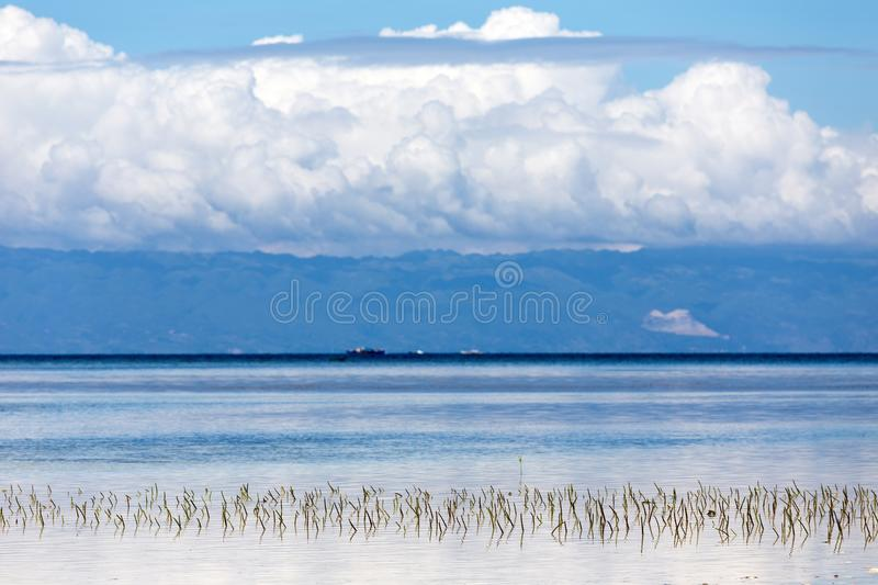 Submerged seagrass on the seashore. Submerged seagrass growing in the water on the seashore in Philippines with moutains topped by fluffy white clouds visible stock photos