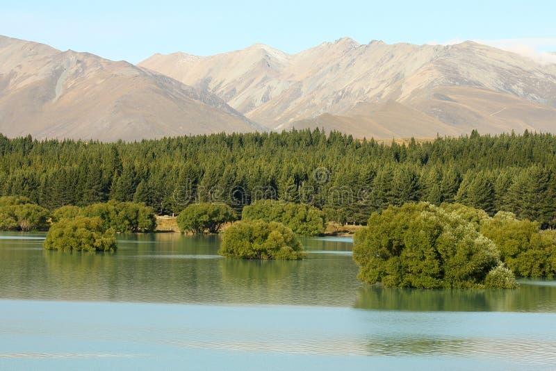 Submerged trees at Lake Tekapo. In New Zealand stock photo