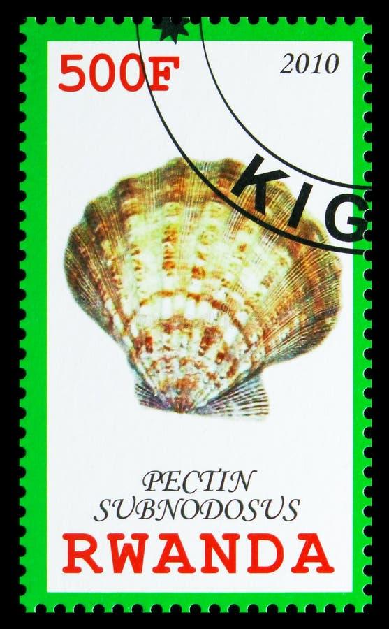 Subnodosus della pectina, serie delle conchiglie, circa 2010 fotografia stock libera da diritti