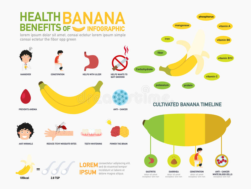 Subsidios por enfermedad del infographics del plátano Vector ilustración del vector