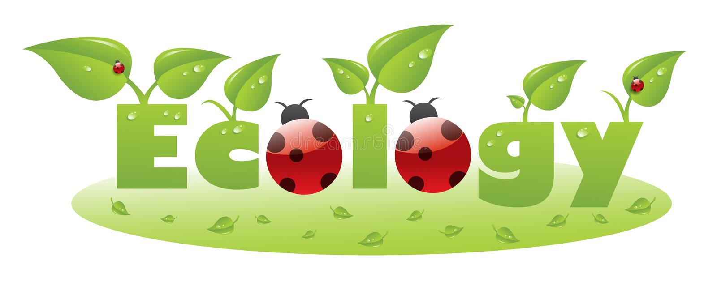 Subtítulo do texto da ecologia com ladybug imagens de stock