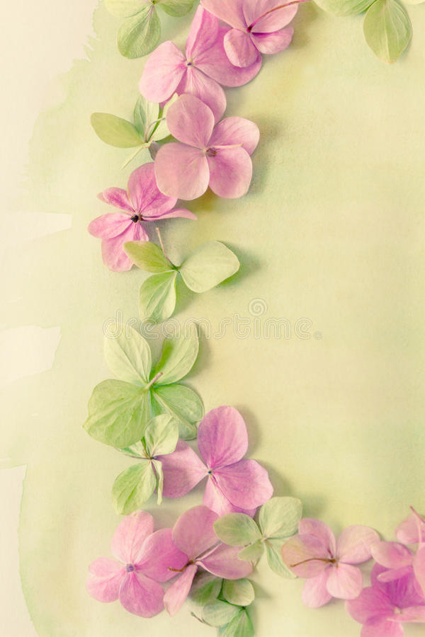 Subtle artistic floral backgrodund with hortensia flowers. Subtle artistic floral backgrodund with pink hortensia flowers royalty free stock photo