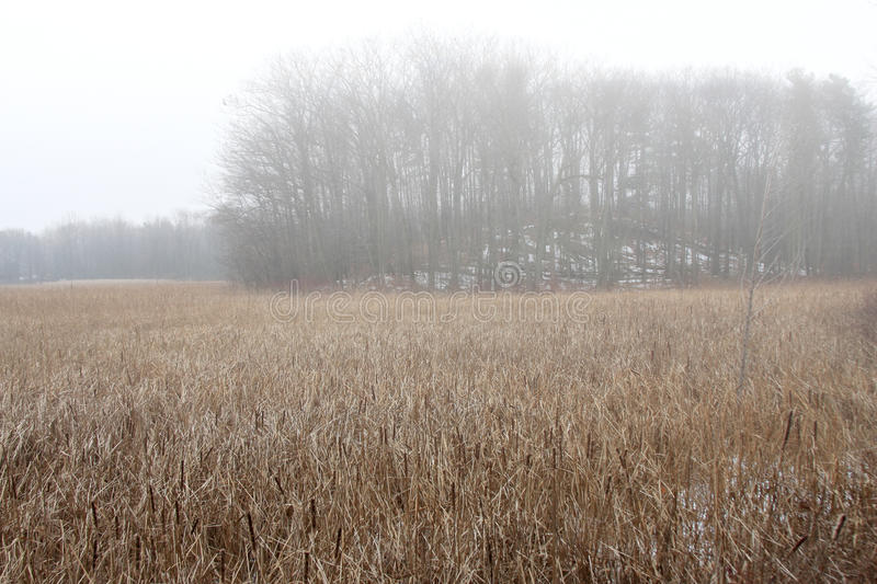 Subtle Colors Of Marsh Grasses In Late Autumn Mist Royalty Free Stock Photography