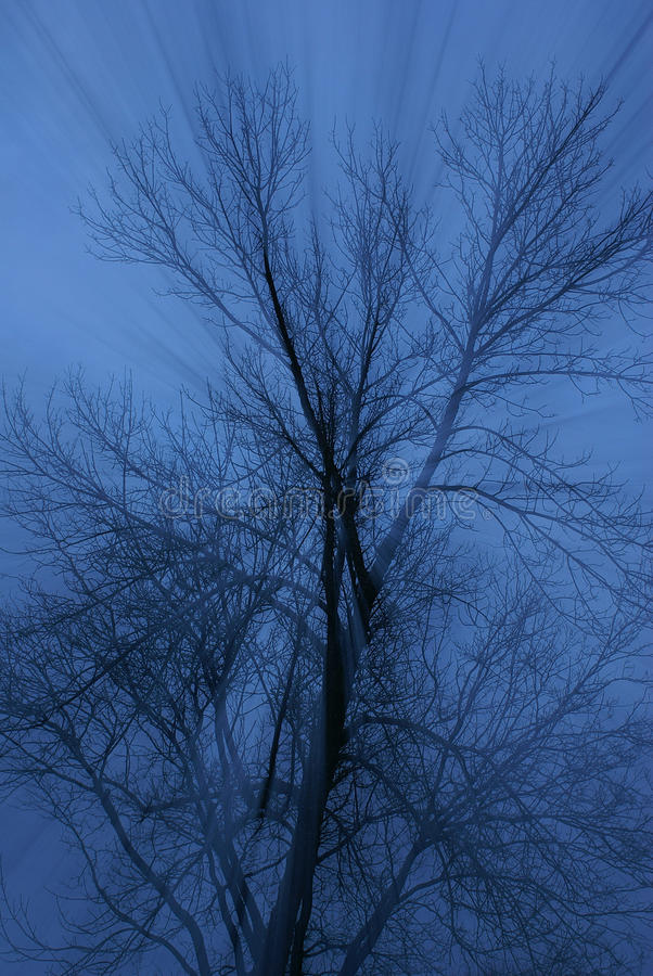 Subtle light rays through dark blue mist, tree with bare branches royalty free stock images