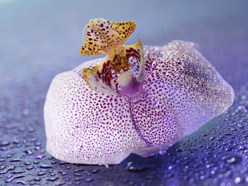 Download Subtle petals stock image. Image of blossom, selective - 30733321