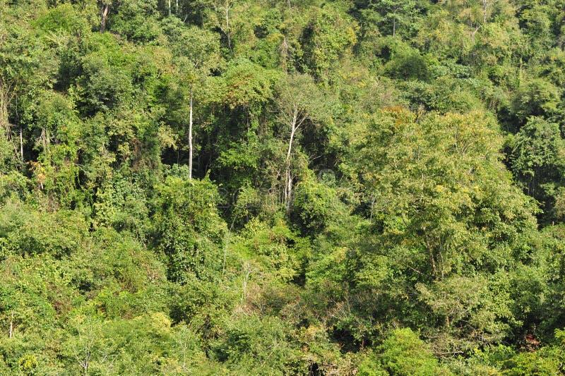 Subtropical Rain Forest stock image