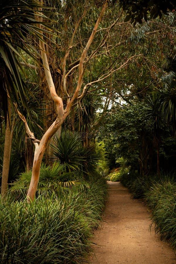 Subtropical trädgårdar av Abbotsbury arkivbild