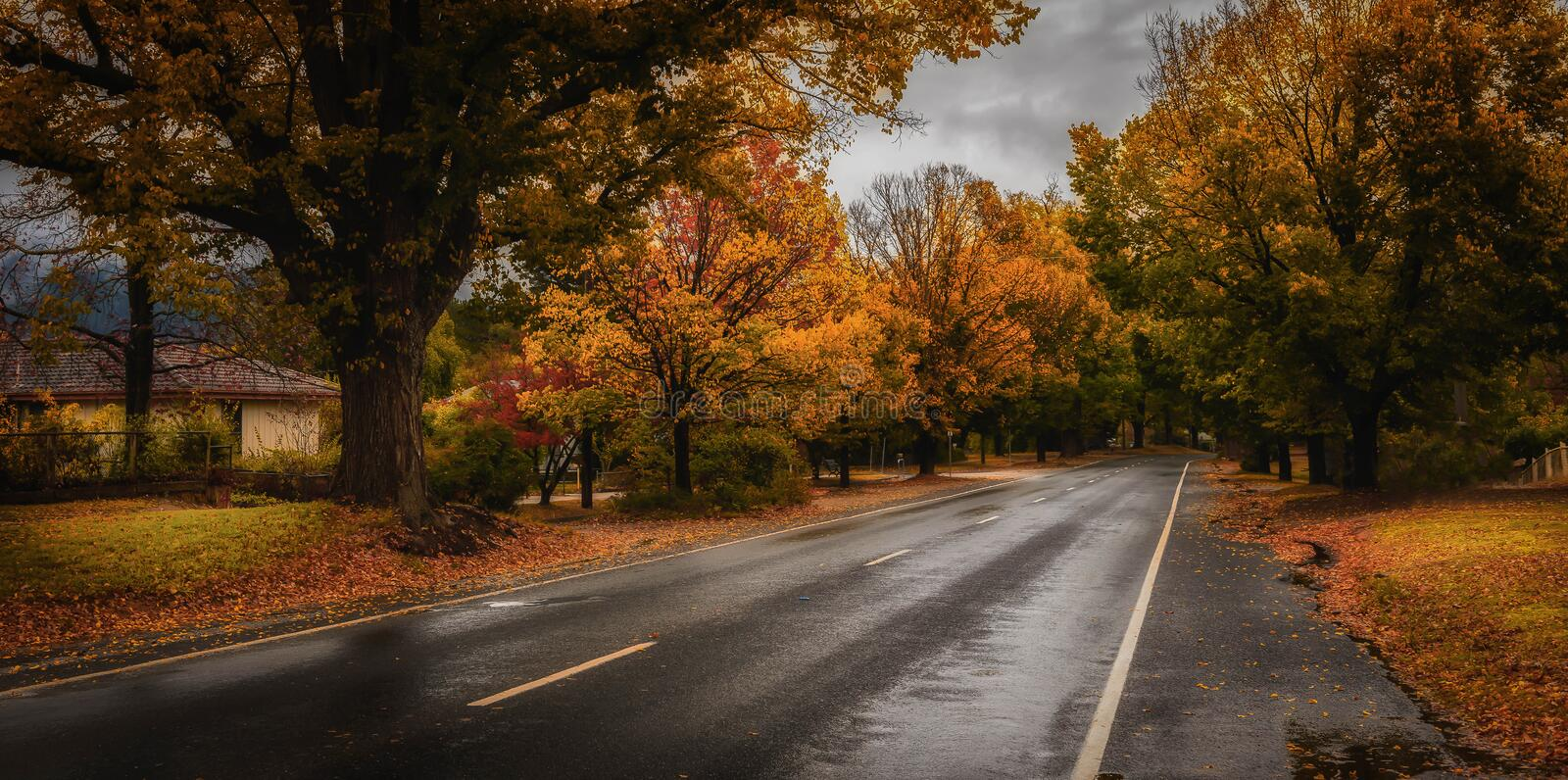 Suburban street with Autumn leaves royalty free stock photography