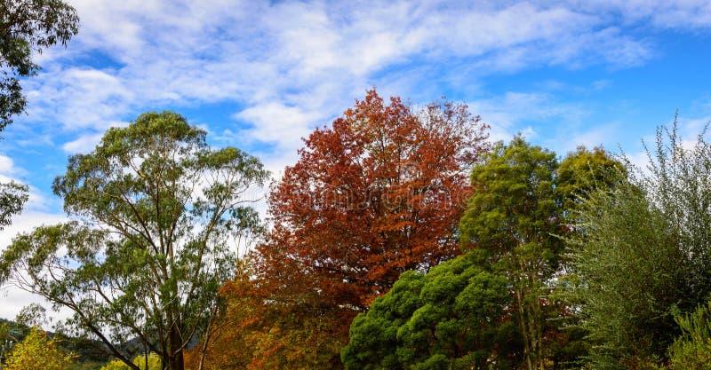 Suburban street with Autumn leaves stock photos