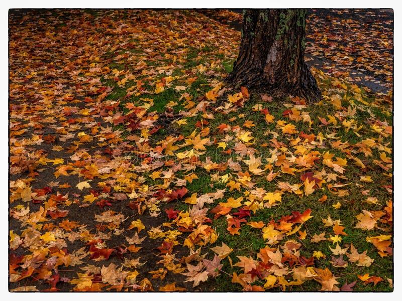 Suburban street with Autumn leaves royalty free stock photos