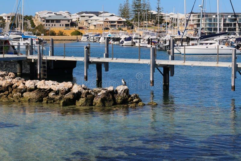 Suburbio y puerto modernos del barco en el océano con poco cormorán de varios colores en frente cerca de Perth, Australia occiden foto de archivo