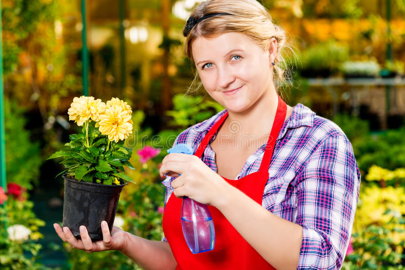 Successful florist with a flower pot. In the greenhouse royalty free stock photos