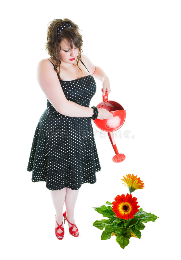 Successful Gardener. A successful gardener, dressed in pinup style, fertilizing a healthy, enormous gerbera daisy! Shot on white background royalty free stock photo