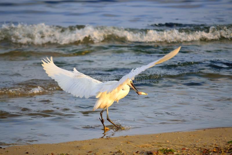 Download Succesvolle Dag Van De Jacht Op Het Strand Stock Foto - Afbeelding bestaande uit greep, hunting: 107701268