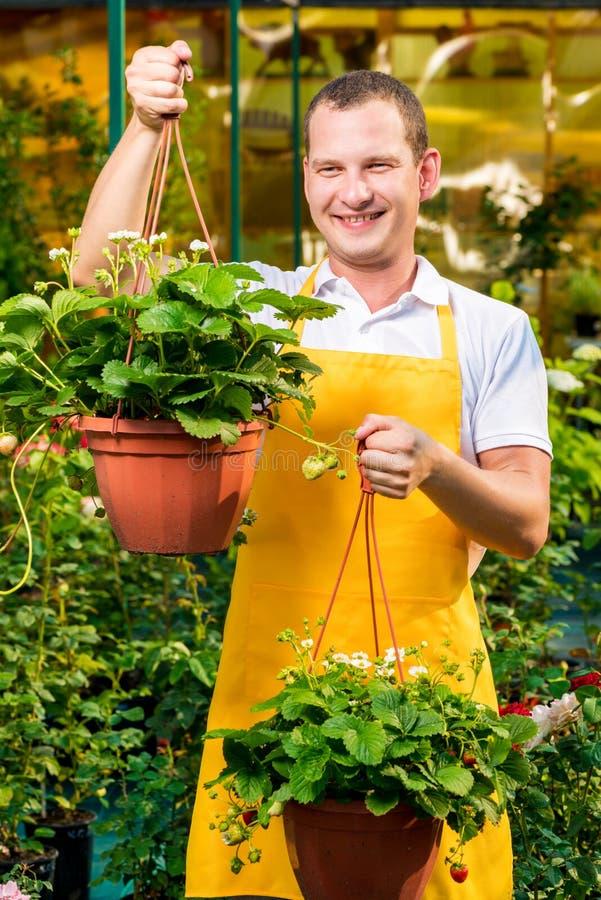 Succesvolle mannelijke tuinman met aardbeien stock afbeelding