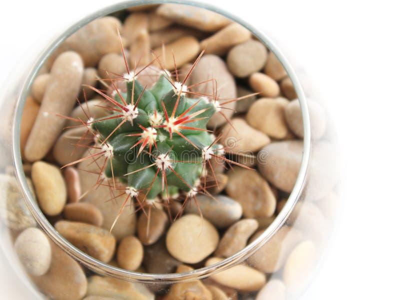 Succulent épineux de cactus dans un pot en verre image libre de droits