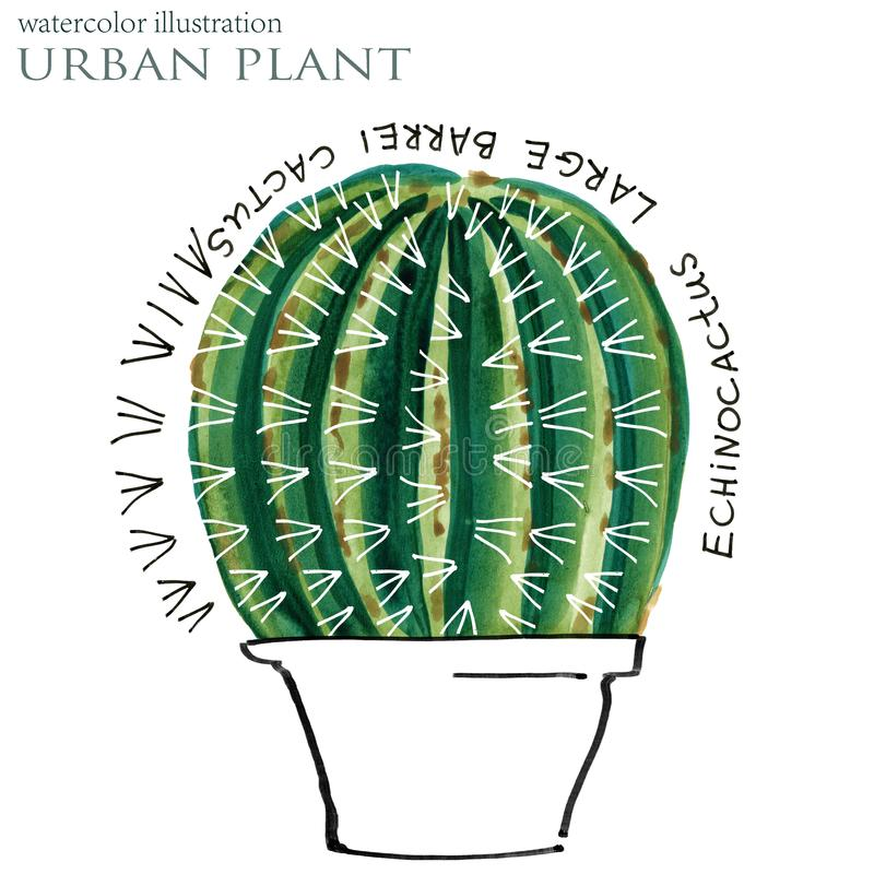 Succulent απεικόνιση watercolor εγκαταστάσεων ελεύθερη απεικόνιση δικαιώματος