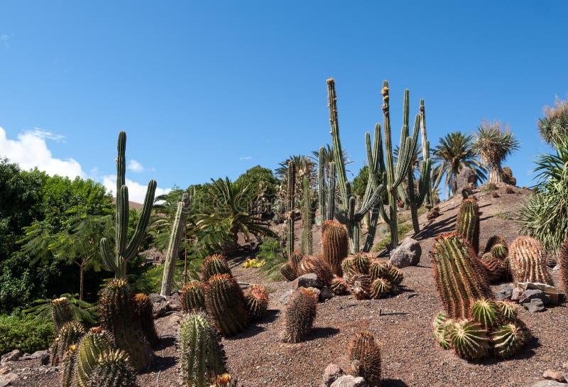 Succulent εγκαταστάσεις κάκτων στον κήπο στοκ φωτογραφία με δικαίωμα ελεύθερης χρήσης