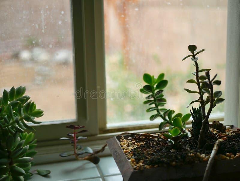 Succulent εγκαταστάσεις σε Windowsill τη θλιβερή βροχερή ημέρα στοκ φωτογραφίες