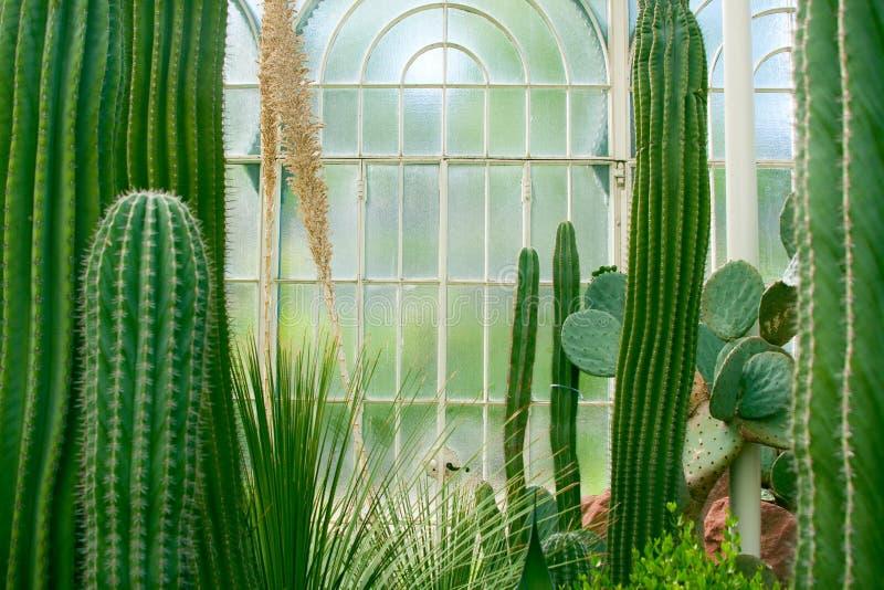 Succulent θερμοκήπιο στοκ εικόνα με δικαίωμα ελεύθερης χρήσης