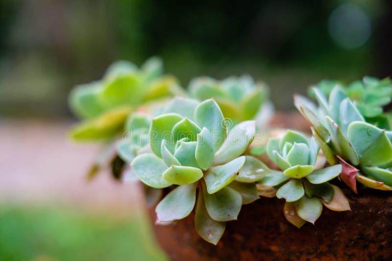 Succulent κάκτος στην κινηματογράφηση σε πρώτο πλάνο, με το όμορφο σχέδιο στοκ φωτογραφία με δικαίωμα ελεύθερης χρήσης
