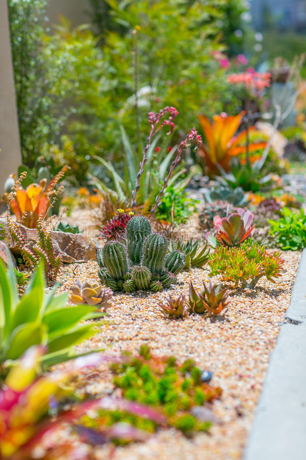Succulent κήπος ερήμων νερού σοφός στοκ φωτογραφία