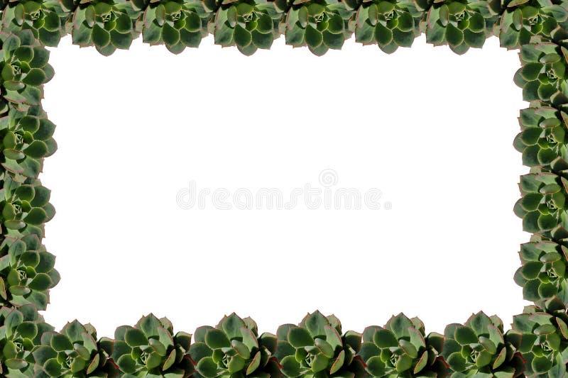 Succulent πλαίσιο εγκαταστάσεων απεικόνιση αποθεμάτων