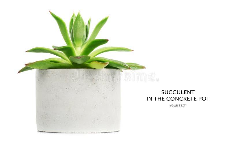 Succulent στο άσπρο δοχείο που απομονώνεται στο άσπρο υπόβαθρο στοκ εικόνες