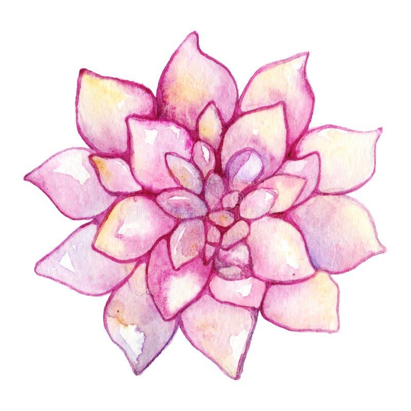 Succulent χέρι εγκαταστάσεων λουλουδιών κάκτων Watercolor που σύρεται που απομονώνεται ελεύθερη απεικόνιση δικαιώματος