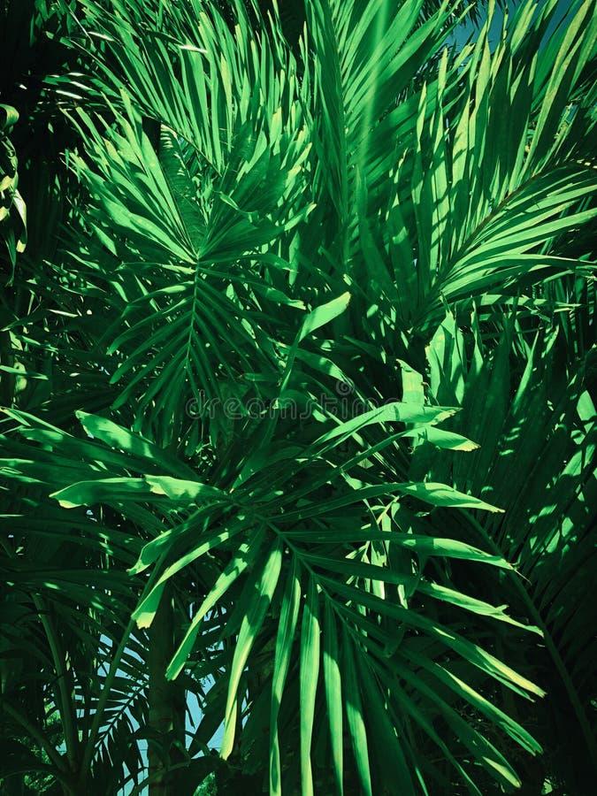 Succulent όξινο υπόβαθρο πράσινων εγκαταστάσεων στον ήλιο στοκ φωτογραφία με δικαίωμα ελεύθερης χρήσης
