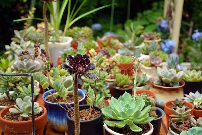 Succulent засаживает бак стоковые фотографии rf