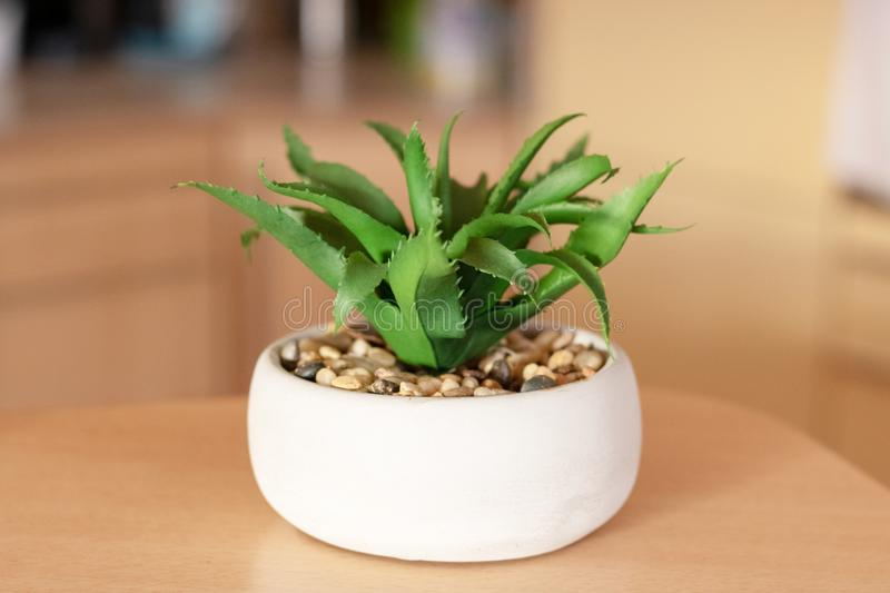 Succulent Aloe Vera Plant on White Pot on Yellow Background.  royalty free stock photos