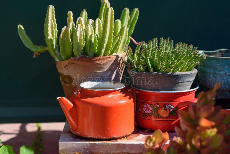 Beautiful succulent plants. Succulent and cactus. Euphorbia and Stapelia plants Design garden stock image